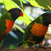 australia resorts birds