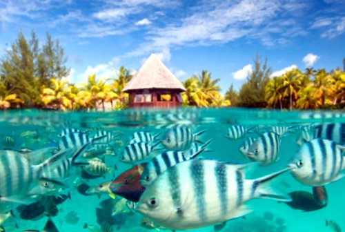 Fish in Bora Bora