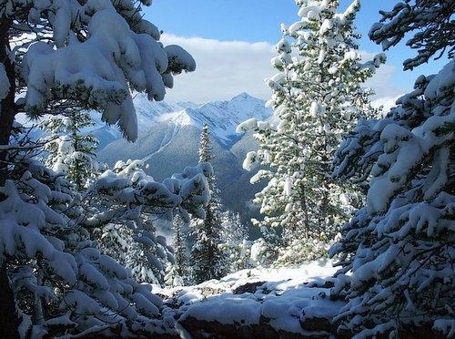 Lake Louise, Snow on the trees