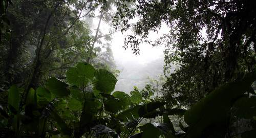 loud Forest at Monteverde - Wikimedia Commons commons.wikimedia.org
