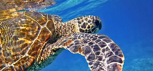 Turtle Travel Guide to Maui Hawaii