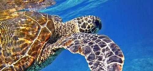 Turtle Travel Guide to Maui Hawaii