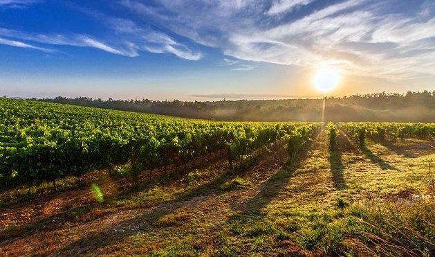 Tuscany Vineyards